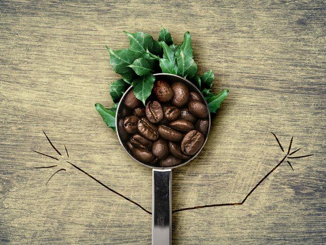 Yeşil Kahve Çekirdeği ile Zayıflama